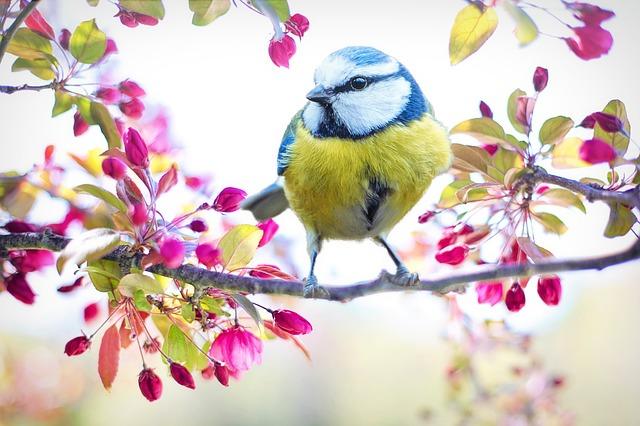 hej våren - hej allergier och eksem